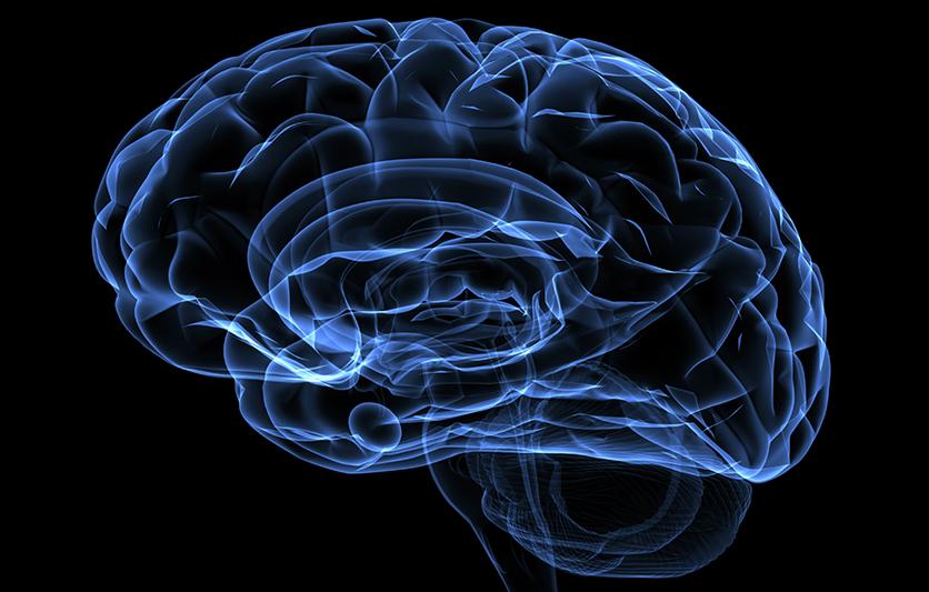 Xray image of a human head brain
